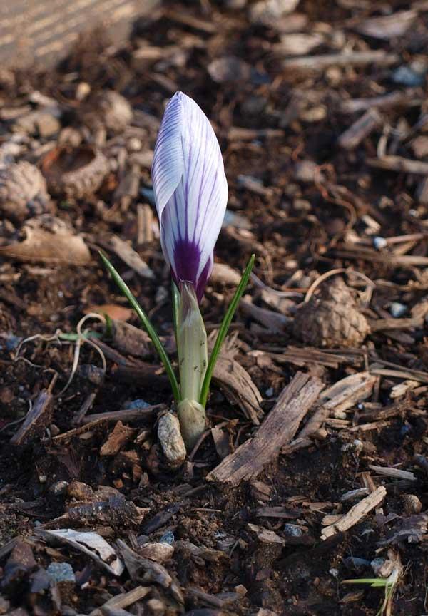 Spring_2010_01